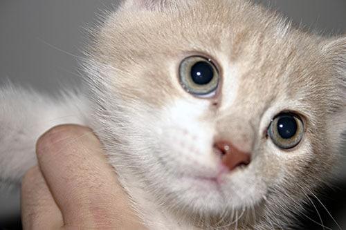 Campaña Adopta un Gato ©Bjorgvin Gudmundsson